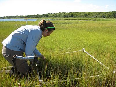Waquoit Bay Reserve Salt Marsh Research & Monitoring