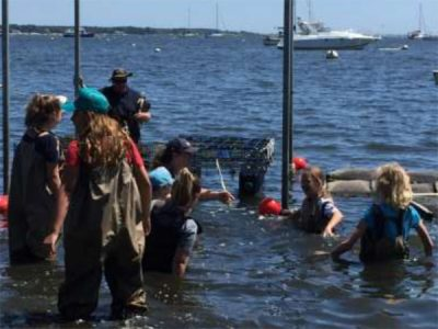 Oysters: Place-based learning with local research (for teachers grades 3-12)